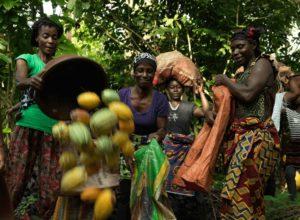 Mujeres africanas cosechando cacao de Comercio Justo